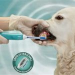 Emmi-Pet hammashoito