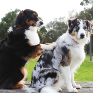 Koiranhoito